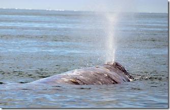 whale_spout[1]
